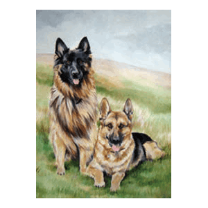 Kort German Sheperds